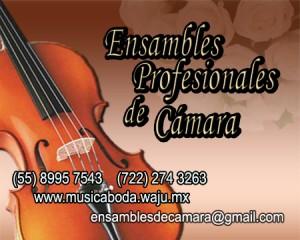 grupo de violines, eventos exclusivos